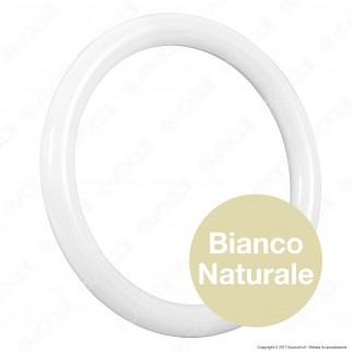Marino Cristal Serie STD Circolina LED G10q 20W Lampadina Diametro 30cm