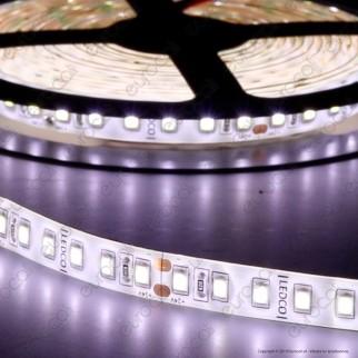 LEDCO Striscia LED 2835 Monocolore 240 LED/metro 24V IP65 per Pescherie - Bobina da 5 metri