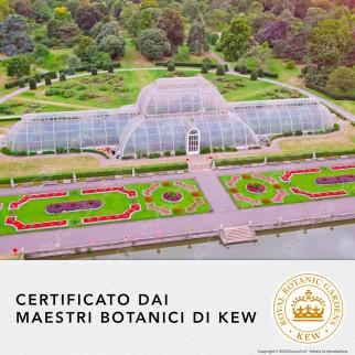 Herbal Essences Balsamo Capelli Fragola Bianca e Menta Dolce Cruelty Free - Flacone da 200ml