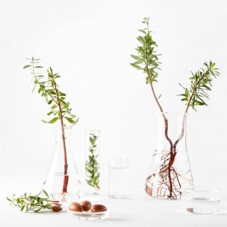 Garnier Bio Crema Viso Idratante Nutriente con Olio di Argan e Aloe Vera Biologica - Tubetto da 50ml