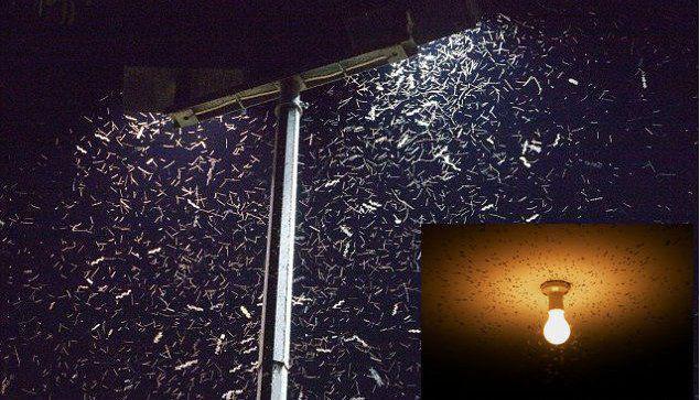Le luci led attirano gli insetti for Luci led piccole