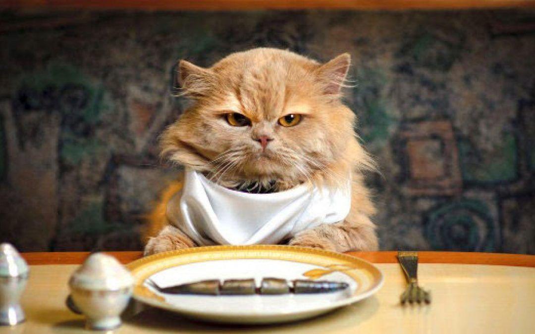 cibo per gatti umido