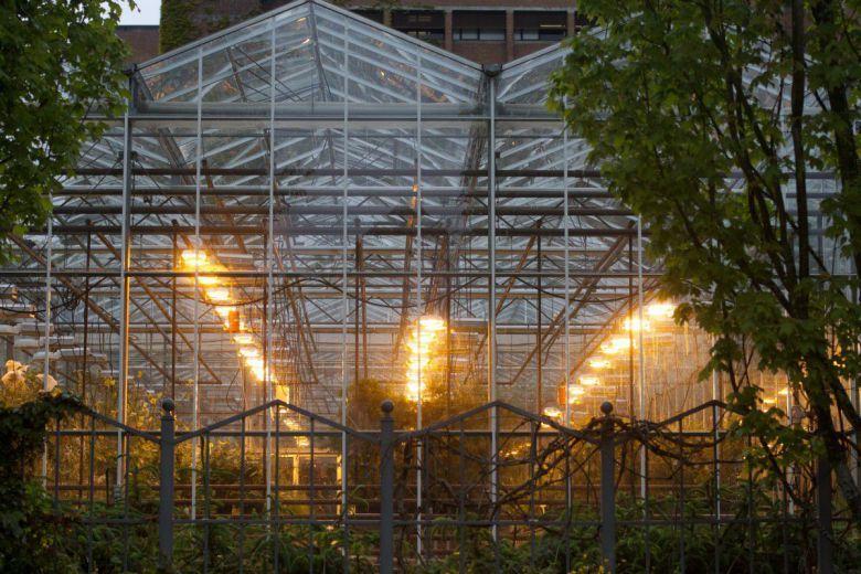 Come illuminare una coltivazione indoor: lumen e par