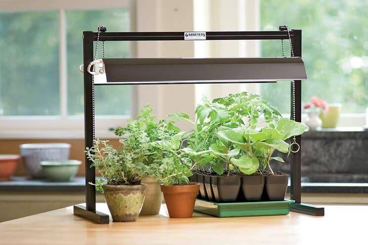 Illuminazione artificiale per le piante quale scegliere